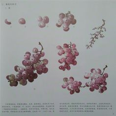 виноград2 Watercolor Flowers, Watercolor Paintings, Watercolours, Chinese Brush, Art Thou, China Art, Chinese Painting, Japanese Art, Art Tutorials