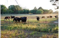 50.228 acre Ranch for Sale in Cherokee County, TX  Acreage: 50.23  Price: $26118560