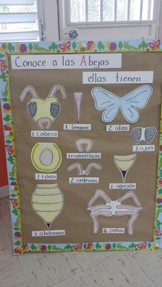 Las partes de la abeja. Insect Activities, Kindergarten Activities, Learning Games For Kids, Science For Kids, Bee Crafts For Kids, Insect Crafts, Creative Curriculum, Butterfly Crafts, Bee Theme