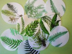 Botanical Fern Edible Image Wafer Papers  by QueenofTartsWafers