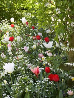 White Bleeding heart and forget-me-nots add charm to pink, white and red tulips and white daffodils. bhg.com