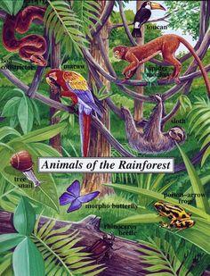 Animal Life - Fiji Rainforest Rainforest Preschool, Rainforest Project, Rainforest Trees, Rainforest Habitat, Rainforest Animals, Amazon Rainforest, Jungle Animals, Daintree Rainforest, Salvador