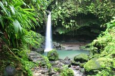 Emerald Pool Nature Trail, Morne Trois Pitons National Park, Dominica