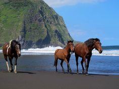 3 Iconic Experiences on Hawaii's Big Island