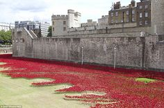 The installation at the Tower of London by ceramic artist Paul Cummins is called Blood-swetp Lands And Seas Of Red and should be finished by Armistice Day