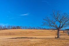 tree off Reservoir Road on the way to Ochs Orchard, photo by Richard Ferrar