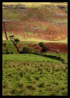 Irish Patchwork, Connemara, Ireland Copyright: Loic Colonna