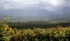Finca Las Moras Winery. Provincia de San Juan. Argentina.