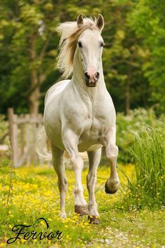 Beautiful white Beautiful Horse Pictures, Most Beautiful Animals, Beautiful Horses, Beautiful Birds, Beautiful Creatures, Nature Animals, Animals And Pets, Cute Animals, Pretty Horses