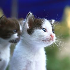 kittens are so adorable