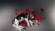 Petition · Avon Products: Stop testing on animals! · Change.org
