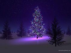 #Winter#Christmas#Background#Holiday#ChristmasTree