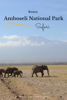 I visited Amboseli for 2 days as part of my safari circuit in Kenya. The park was beautiful with the views of Mount Kilimanjaro and magical sunrises!