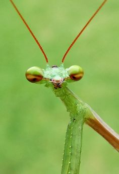 Praying Mantis Photo by Tony Mackrill -- National Geographic Your Shot