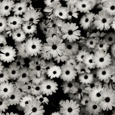 Pictures of black and white flowers google search pictures of find this pin and more on random by l mightylinksfo