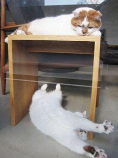 どんこと小春 Adorable Animals, Cute Cats, Paw Pad, Cat Life, Neko, Cats And Kittens, Dog Cat, Dogs, Diy Dog