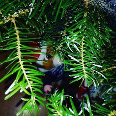 Postări pe Instagram de la Diana Petre • Dec 25, 2018 at 5:41 UTC Diana, Plant Leaves, Instagram Posts, Plants, Flora, Plant, Planting