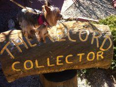 Coco collects vinyl. #yorkie
