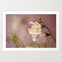 White flower and texture Art Print by Nicholas Smith - $14.56