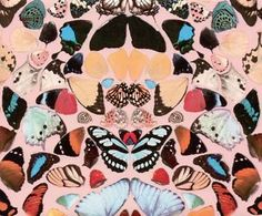 Damien Hirst butterfly wings, the exhibition was awesome..... these images were stunning