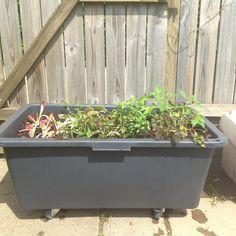 Lige for tiden er jeg ved at indrette min lille terrasse i min kolonihave. Jeg har nemlig aldrig nok plads til det jeg gerne vil dyrke i min køkkenhave, derfor udvider jeg med en krukkehave på terrassen. Jeg har lavet et transportabelt krydderurtebed med selvvandingssystem. Der er nemlig meget man kan dyrke i potter, men Læs mere...
