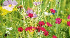 Headline Grassroots campaign: Take action in your lawn Types Of Lawn, Seed Germination, Garden Maintenance, Wildflower Seeds, Spring Bulbs, Weed Control, Take Action, Lawn Care