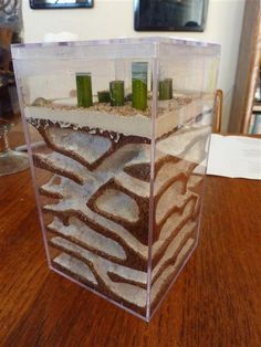 This is a delux ant farm homemade