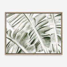 Featuring a scene of the leaves of banana palm tree, this stretched photographic canvas art print arrives. Mirror Artwork, Canvas Artwork, Canvas Art Prints, Canvas Frame, Framed Art Prints, Bedroom Artwork, Bedroom Decor, Wall Decor, Banana Palm