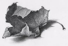 THE BEAUTY OF DECAY - 绘画,  21x13.5 cm ©2015 Nives Palmić -                                                                                                            插图, 现实主义, 纸, 植物, 性质, 四季, 静物, charcoal drawing, miniature, fallen leaf, autumn leaves, beauty of decay, textural