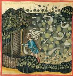 Man harvests zucchini, while the vines create a beautiful, nearly abstract tapestry. Medieval Life, Medieval Art, Medieval Manuscript, Illuminated Manuscript, Art Brut, Art For Art Sake, Botanical Art, Ancient Art, Islamic Art