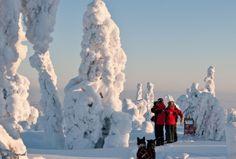 Hundeschlittenurlaub in Finnland mit Travel To Life