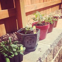 Organic garden vintage pots