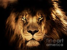 King of the Jungle. Digital painting of a lion by Tracey Lee Everington of Tracey Lee Art Designs Jungle Lion, Male Lion, Art Designs, Fine Art America, Digital Art, Wildlife, Photoshop, King, Wall Art