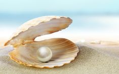 oceans and pearls picture - Sök på Google