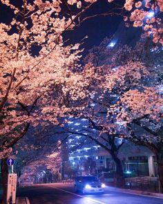 Улицы вечернего Токио #japan#japan2016#япония#японский#японские#путешествие#casualjapan #природа#азия#instajapan#сакура#веснавяпонии#япония2016#красивыеместа#храмы
