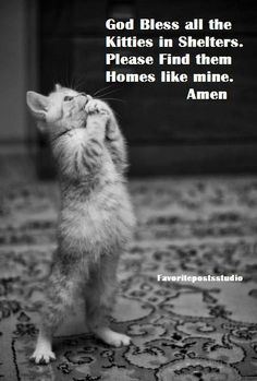 And the kitties on the streets.. A cat's prayer