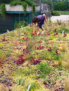 PhytoKinetic: Lightweight Green Roof System For City Buses and Vehicles