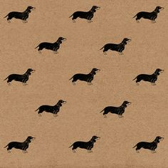 Teddie the Dachshund, toddling into my my Etsy shop 💜 https://www.etsy.com/uk/listing/277269444/sausage-dog-wrapping-paper-eco-friendly