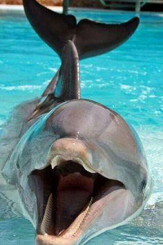 Dolphin Speaking