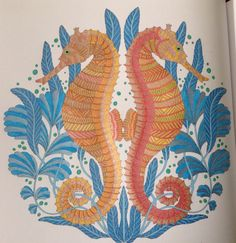 Seahorse's :)) from Millie Marotta's Tropical Wonderland Book. August 2015