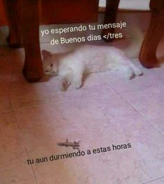 Cute Spanish Quotes, Spanish Memes, Cute Memes, Funny Quotes, Funny Images, Funny Pictures, Romantic Memes, Roblox Memes, Pinterest Memes