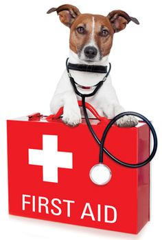Build an all-natural first aid kit for your pets. Holistic home remedies for your dog or cat.