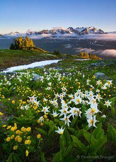 Bailey Range, Olympic National Park, Washington.  Photo: Floris Van Breugel