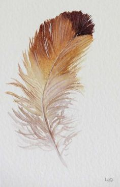 Feather study original watercolour painting illustration art drawing by Lisa Le Quelenec at seaside studios Feather Drawing, Watercolor Feather, Feather Painting, Feather Art, Watercolor Art, Watercolour Paintings, Watercolours, Watercolor Painting Techniques, Painting & Drawing
