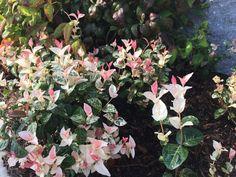 梅雨は明けたのに、天候の安定しない日が続いていますね。 筆者が暮らす栃木県では日中は気温35度以上、夕方は急な… Floral Wreath, Wreaths, Plants, Decor, Floral Crown, Decoration, Door Wreaths, Deco Mesh Wreaths, Plant