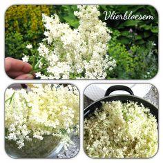 Elderberry flowers by helenahaakt.blogspot.com (Vlierbloesem)