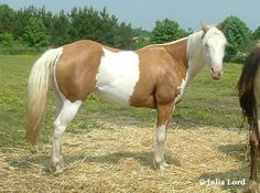 Awesome markings on this paint named Golden Tequila Dream.