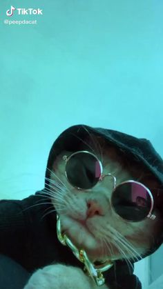 peep( has created a short video on TikTok with music In My City. Cute Cat Memes, Cute Animal Memes, Animal Jokes, Cute Funny Animals, Funny Memes, Baby Animals Pictures, Cute Animal Photos, Funny Animal Pictures, Cute Baby Cats