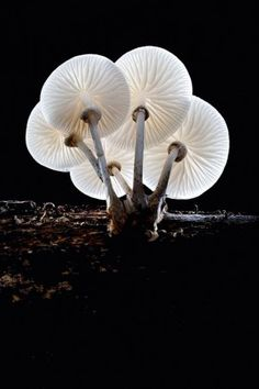 fungi35✖️ Mushrooms More Pins Like This At #FOSTERGINGER @ Pinterest