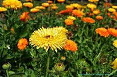 jardim zoológico jardim botânico belo horizonte flor flores